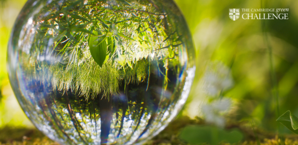 A photo of a tree reflected in a water drop